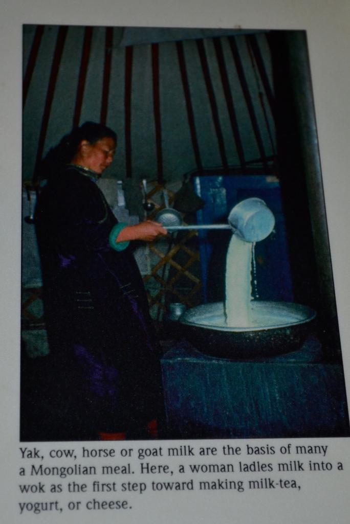 A Mongolian woman making yogurt inside her ger.