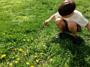Picking dandelions.